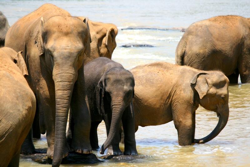Im Elefanten-Park