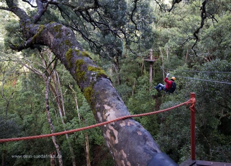 Tsitsikamma Rain Forest