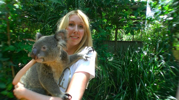 Landausflug Koala