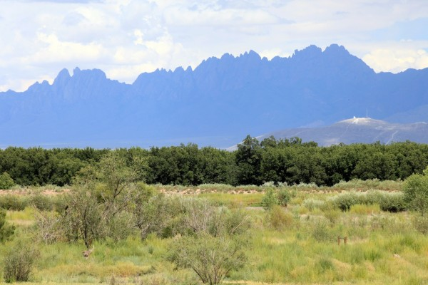 Mesilla Valley