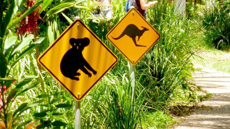 Koala Sign Magnetic Island