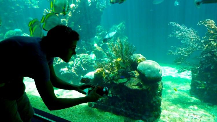Aquarium Noumea
