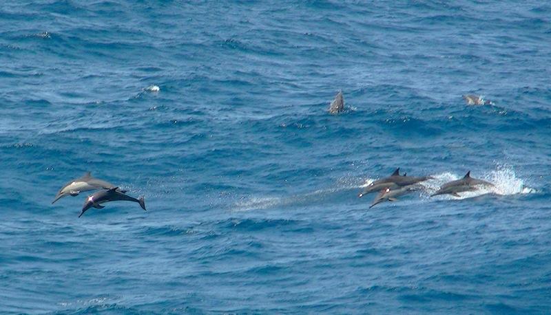 Delfine im Piratengebiet