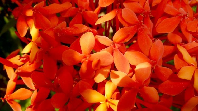 Pflanze in Samoa