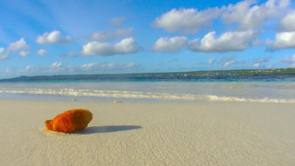 Strand auf der Karibikinsel Bonaire