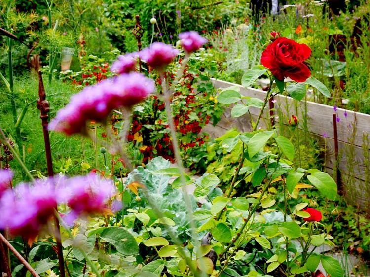 Traumfoto mit Blume 2