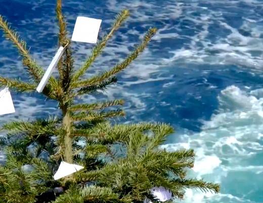Der gruene Tannenbaum verabschiedet sich in die tuerkisfarbene Südsee