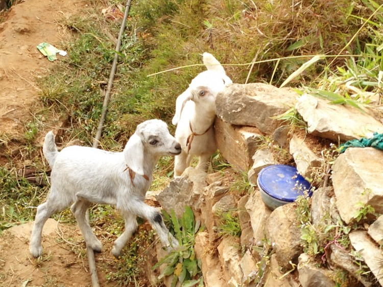 Abenteuerurlaub-Nepal10