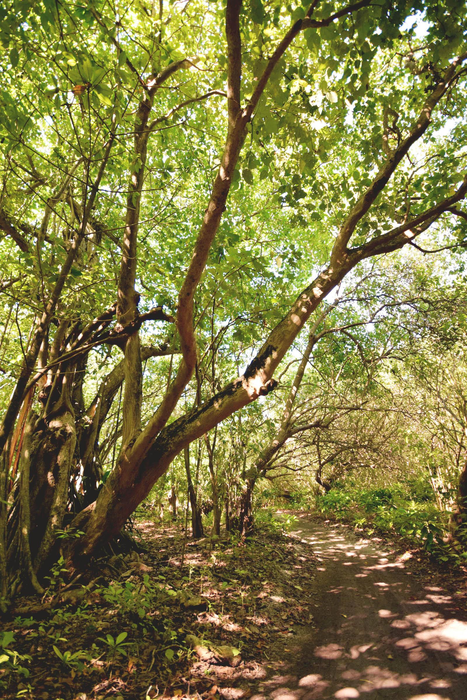 Addu-Atoll-Forest