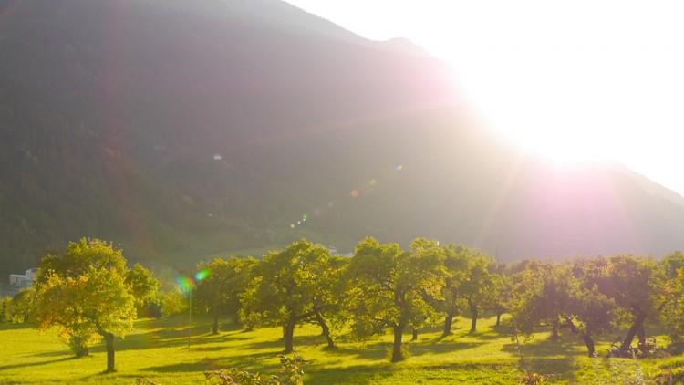 Apfelwiesen in Italien
