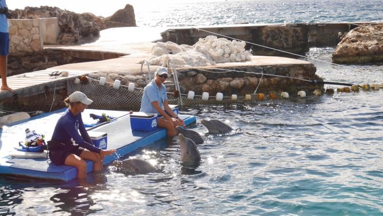 Dolphin-Academy-Curacao-2