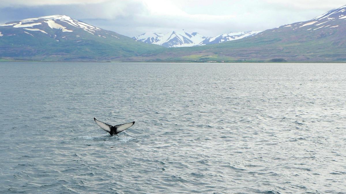 Wale-Kreuzfahrtschiff